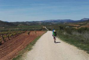Auf dem Weg nach Estella